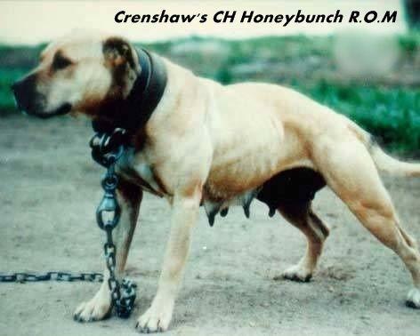 Pedigree Database: CRENSHAW'S HONEYBUNCH TRUE PEDIGREE