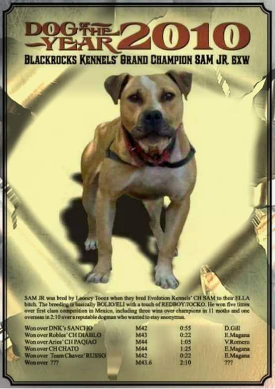 Pedigree Database: BLACKROCKS' SAM JR