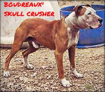 Pedigree Database: BOUDREAUX' SKULL CRUSHER